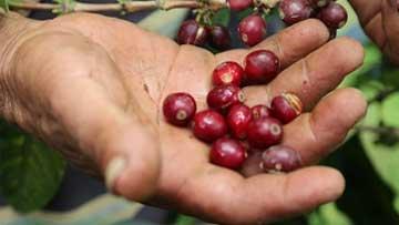 Premian labor de FNC por mejorar gestión de seguridad y salud en el trabajo en el sector cafetero